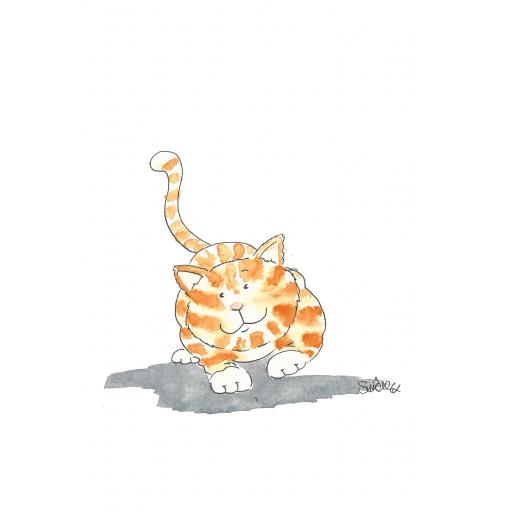Cat .jpg