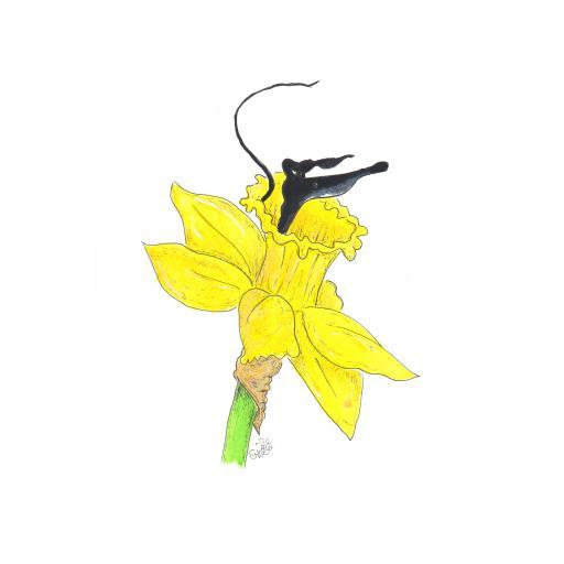 Daffodil Spring - various mugs